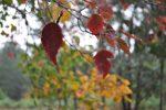 Autumn Ryan